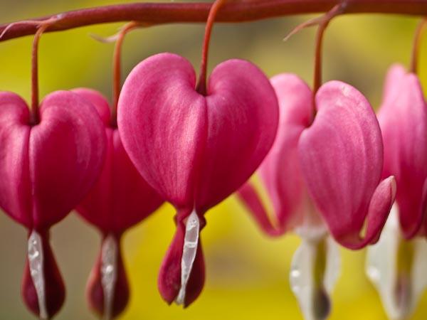 Hearts of Spring © 2010 Bo Mackison