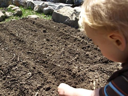 planting 009