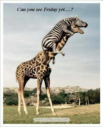 zebra giraffe