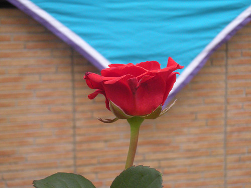 Sant Jordi 2010 005