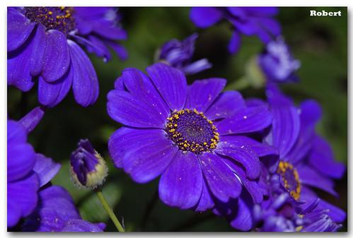 Regala flores a tu pareja en San ValentA�n