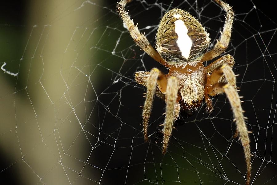 [分享] 新人首PO ~ 蜘蛛