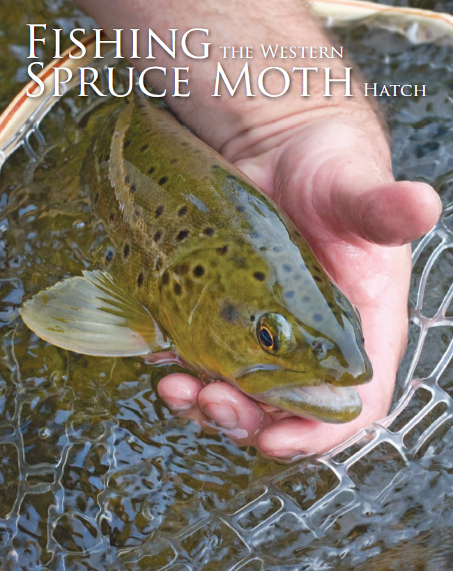 FLYFISHER Mag, May 2010 Article.