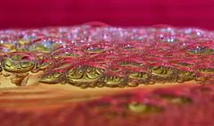 Foam on the water... (Thomaniac) Tags: abstract macro reflection water closeup contrast colorful wasser bokeh vivid bubbles foam refraction liquid bunt nahaufnahme schaum leuchtend farbenfroh blasen flssigkeit lebendig canoneos450d efs60mmmacrousm thomaniac