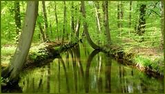 5mei10: voorjaar Deldenesesch. (guus timpers) Tags: green spring bomen groen lente twente esch beuken delden voorjaar beuk frhjahr hofvantwente reflecties deldeneresch twickelerbeek twickelervaart springtimes nspring