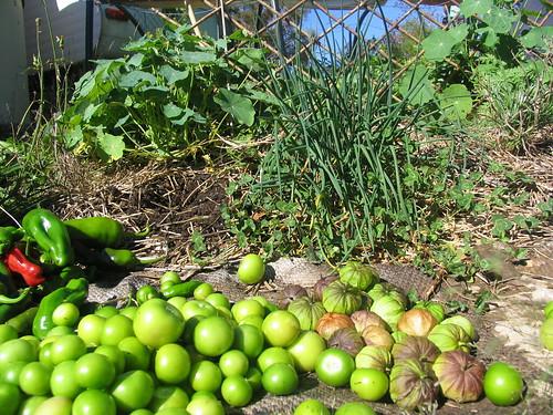 basecamp harvest