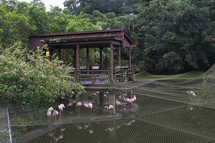 台北木柵動物園0027