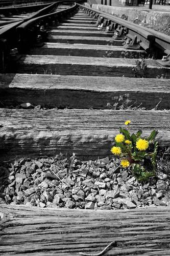 Train Tracks #5