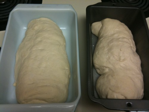 Bread loaves after rising (humid on the right)