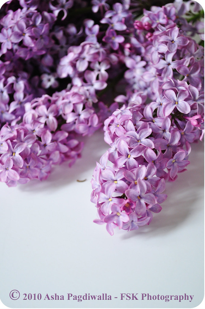 Lilacs on the table
