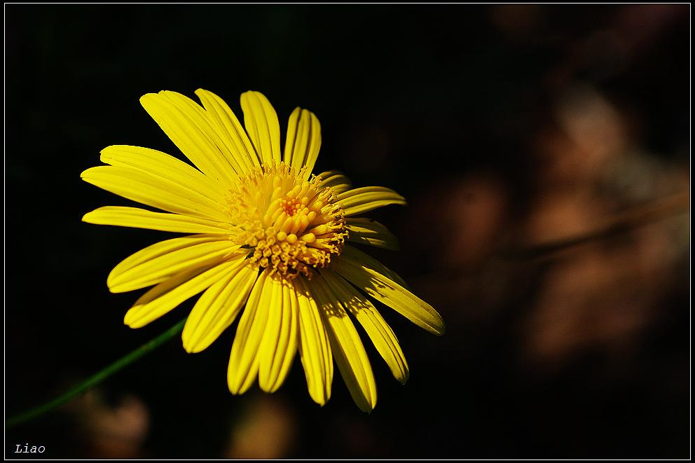 陽明山花卉中心雜拍