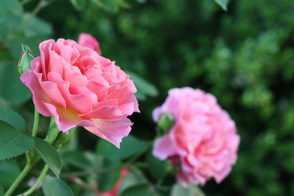 Nancy's Garden (5-10) - 5