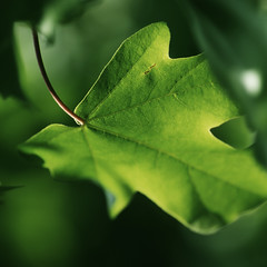 ^_^ (Yoko  (Paulina)) Tags: green nature germany deutschland leaf dof bokeh natur mai grn blatt 2010 windig tiefenschrfe einfachheit drwiss yokosarts