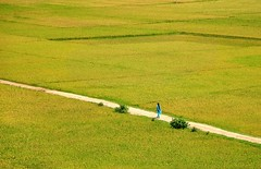 She (fahim_123752) Tags: green field yellow paddy birishiri