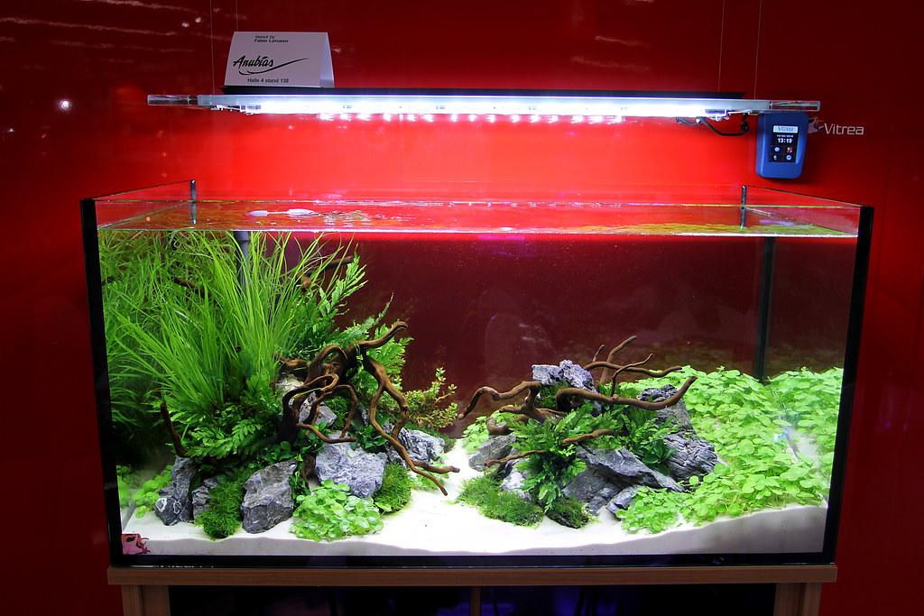 ... Small Size on Pinterest Aquascaping, Planted aquarium and Aquarium