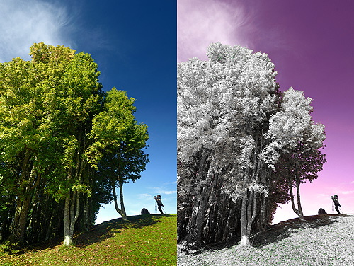 Photoshop infrared effect