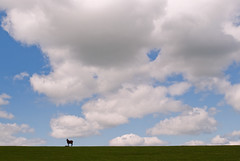 Horse and Foal (Nick Landells) Tags: blue sky horse clouds focus cloudy cumulus manual foal d80 nikkor35mmf28