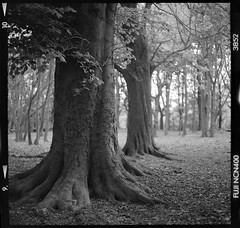 Texture Tree (Edd Noble) Tags: blackandwhite bw london mamiya fuji firstday heath epson hampstead f28 80mm v700 sekor ncn400 c330f peakimaging
