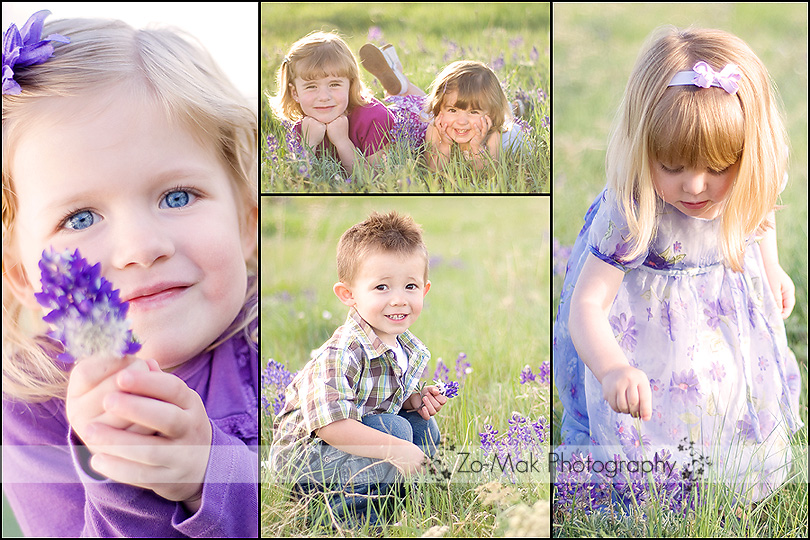 wildflower mini session collage