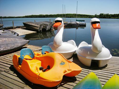 Lake Wingra Swans