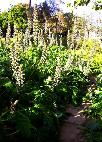 Path Through Acanthus