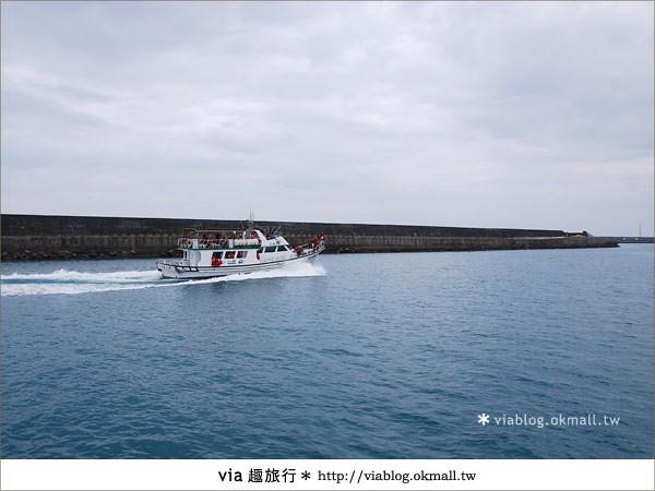 【花蓮賞鯨】花蓮玩樂趣~花蓮賞鯨之旅6