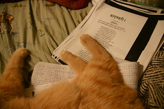 jeoffry lays on lots of things at once (romana klee) Tags: orange cute feet cat work notebook ginger chillin papers kitteh paws dear demotivation jeoffry lulzy catprojects kāvya कादम्बरी kādambarī