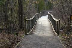 Towards eternity..!! (Rekha Prasad) Tags: park bridge canada nature path charleston explore route kingston trail eternity charlestonprovincialpark