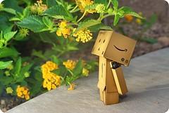 I wish I had a nose.... (butacska) Tags: morning flower yellow lasvegas sony lantana a100 danbo danboard