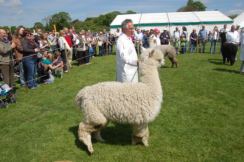 Northumberland County Show May 10 7
