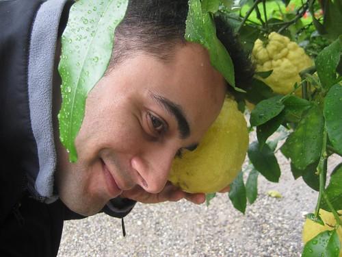Freaky Citrus