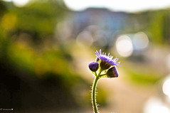 So Joyful  \ (O) /  Waves!!! (tourmania) Tags: street flower nature nikon bokeh greens greeting