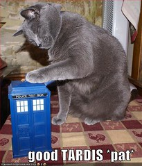 A large grey cat pats the top of a TARDIS toy.  The caption reads Good TARDIS *pat*.