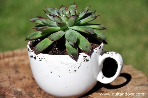 Plantinha na xícara