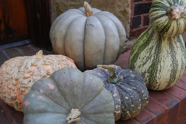 heirloompumkins