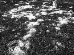 Forest floor (AlpineSta**) Tags: trees shadow bw sun white black monochrome leaves mono glade spattering patchy