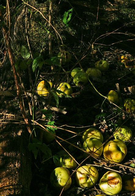 Little Green Apples (2)