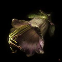 The Spirit of the Dark (29dreamcatcher29) Tags: tag idream mywinners artistictreasurechest