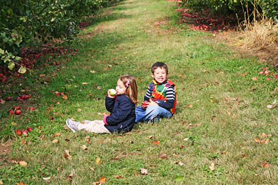 Apple Picking 2010: Now, With Less Stress!