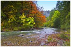 Selva de Irati (miguelangelortega) Tags: autumn fall river landscape nikon otoño ltytr2 ltytr1 ltytr3 ltytr4 ltytr5