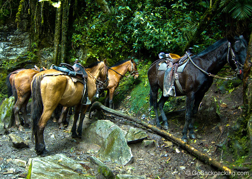 Our trusty Colombian horses.