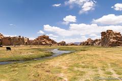 Llama Paradise (takashi_matsumura) Tags: llama paradise paraiso uyuni bolivia fauna landscape ngc nikon d5300 sigma 1750mm f28 ex dc os hsm