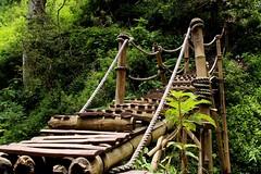 Treteg Pring (Prayitno / Thank you for (12 millions +) view) Tags: konomark bamboo manmade bridge walkway steps stairs crosswalk outdoor malang jawa timur jembatan bambu activity tropical rainforest small creek sungai hiking