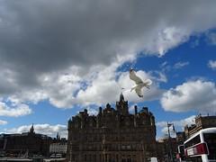 Seagull (stillunusual) Tags: edinburgh city scotland uk sky cloud seagull gull cityscape urban urbanscenery urbanlandscape landscape travel travelphotography travelphoto travelphotograph 2017