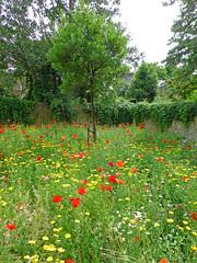 Mini Meadow. (ArtGordon1) Tags: walthamstow walthamstowvillage meadow london england uk e17 davegordon davidgordon daveartgordon davidagordon daveagordon artgordon1 wildflowers flowers