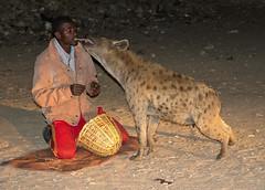 hyena man (geneward2) Tags: hyena man animal feeding mammal harar ethiopia