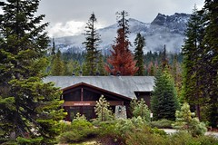 A Beautiful Mountain Backdrop for a Lodge in Sequoia National Park (thor_mark ) Tags: nikond800e day9 triptopasoroblesandyosemite sequoianationalpark lookingne capturenx2edited colorefexpro sequoiaandkingscanyonnationalparks unescosequoiakingscanyonbiospherereserve sequoiakingscanyonbiospherereserve outside landscape nature pacificranges sierranevada sequoiasierranevada westernsequioakingscanyonarea hillsideoftrees trees overcast mountains mountainsindistance mountainsoffindistance evergreens talltrees talltreesallaround redwoods wuksachilodge aroundwuksachilodge mountsilliman kingskaweahdivide lodgeentrance project365 california unitedstates