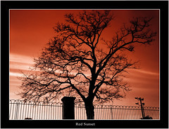 Red Sky (lagpres) Tags: sunset red sky tree canon eos simplicity lag pres 1000d lagpres