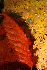 After the rain, the sun (eosfoto) Tags: france colour nature colors rain closeup contrast canon drops flora ngc natuur alsace frankrijk bos schaduw 2009 zon soe regen bui herfstkleuren druppel takeabow druppels elzas naturesfinest regenbui otw theworldwelivein supershot flickrsbest bej platinumphoto aplusphoto ultimateshot diamondclassphotographer flickrdiamond theunforgettablepictures platinumheartaward theperfectphotographer goldstaraward spiritofphotography vosplusbellesphotos waterenvirons thebestofcengizsqueezeme2groups adrinnesmagicalmoments