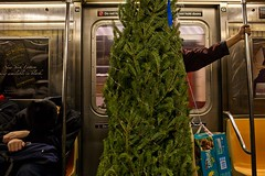 Christmas in the Subway (joshuazweinstein) Tags: newyorkcity ny brooklyn subway pacific christmastree btrain diapers atlanticcenter huggies